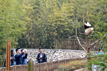 Panda0360