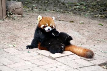 Panda0410