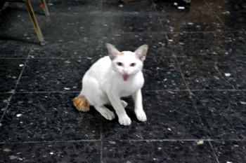 Bangkok_0071