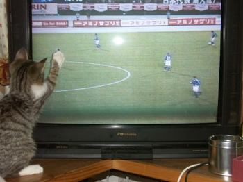 soccer1884